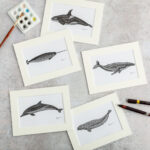 katherine jones whale pic
